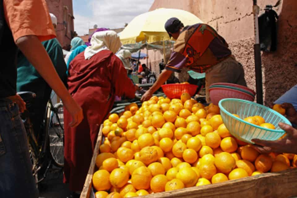 morocco oranges2