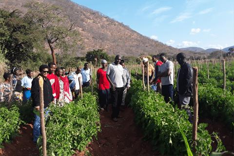 Tanzania farm