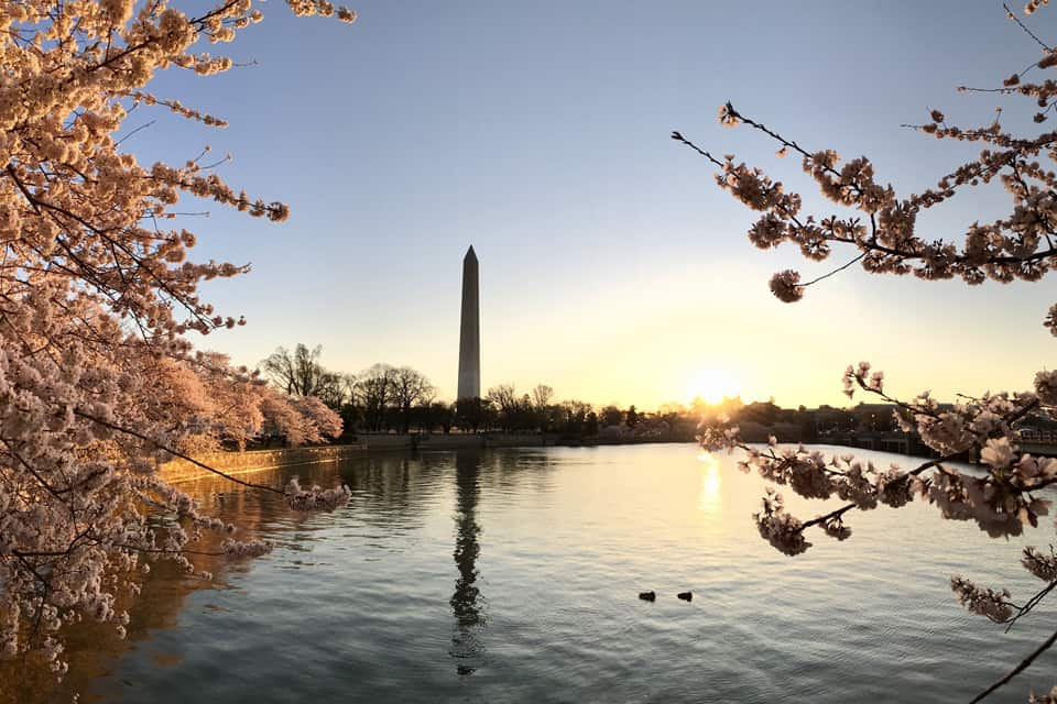 Washington Monument in the spring1